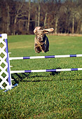 DOG 06 JN0014 01