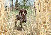 DOG 06 JN0015 01