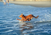 DOG 06 JN0016 01