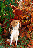 DOG 06 KH0027 01