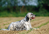 DOG 06 KH0029 01