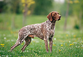 DOG 06 KH0030 01