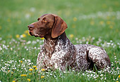 DOG 06 KH0031 01