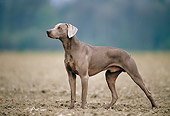DOG 06 KH0033 01