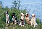 DOG 06 KH0034 01