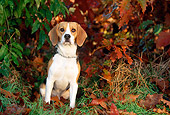 DOG 06 KH0036 01