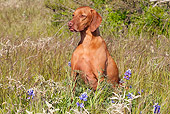 DOG 06 LS0033 01