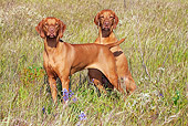 DOG 06 LS0034 01
