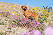 DOG 06 LS0035 01