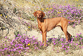 DOG 06 LS0036 01