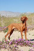 DOG 06 LS0037 01