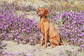 DOG 06 LS0038 01