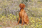 DOG 06 LS0039 01