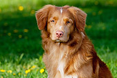 DOG 06 LS0042 01