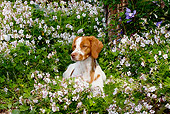 DOG 06 LS0044 01