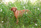 DOG 06 LS0046 01
