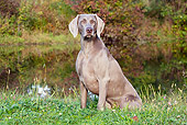 DOG 06 LS0047 01