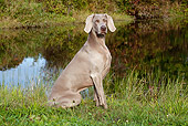 DOG 06 LS0048 01