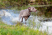 DOG 06 LS0050 01