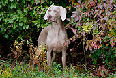 DOG 06 LS0051 01