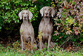 DOG 06 LS0052 01