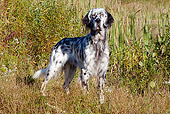 DOG 06 LS0053 01