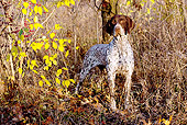 DOG 06 LS0054 01