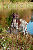DOG 06 LS0063 01