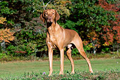 DOG 06 LS0069 01