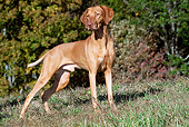 DOG 06 LS0070 01