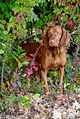 DOG 06 LS0071 01