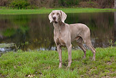 DOG 06 LS0073 01