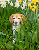 DOG 06 LS0074 01