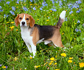 DOG 06 LS0075 01