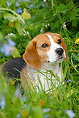 DOG 06 LS0078 01