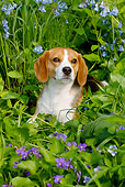 DOG 06 LS0079 01