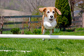 DOG 06 LS0084 01
