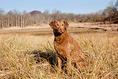 DOG 06 LS0086 01