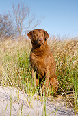 DOG 06 LS0087 01