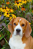 DOG 06 LS0090 01