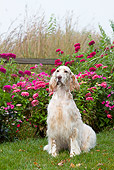 DOG 06 LS0096 01