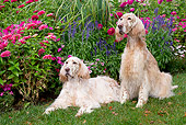 DOG 06 LS0098 01