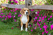 DOG 06 LS0100 01