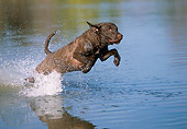 DOG 06 LS0103 01