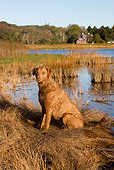 DOG 06 LS0104 01