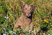 DOG 06 LS0105 01