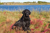 DOG 06 LS0106 01