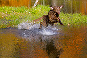 DOG 06 LS0110 01