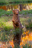 DOG 06 LS0112 01