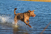 DOG 06 LS0113 01